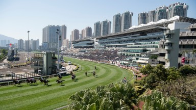 Runners in the Jim And Tonic Handicap at Sha Tin