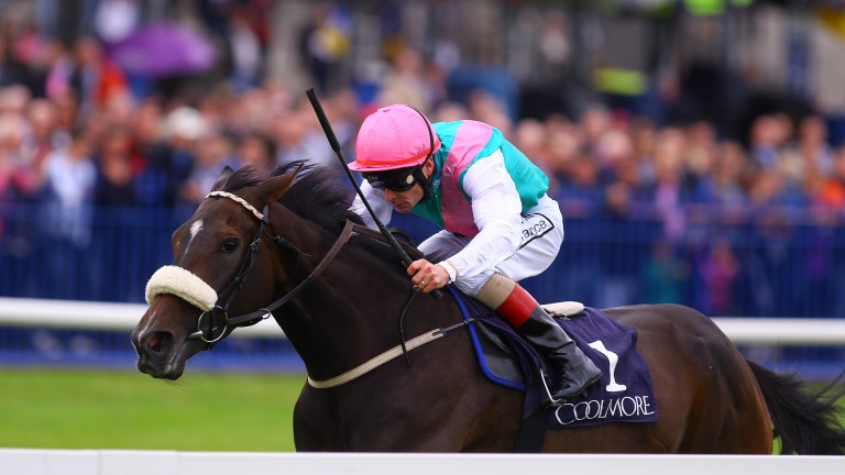 Emulous: won the Coolmore Matron Stakes under Pat Smullen in the colours of Khalid Abdullah in 2011
