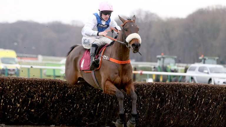 Waiting Patiently: has not run since finishing third in last season's Tingle Creek