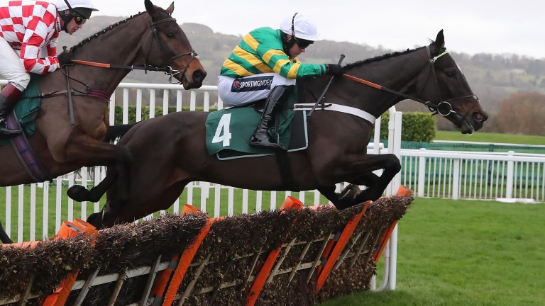 Chantry House: in winning action at Cheltenham