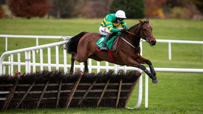 Andy Dufresne: is the star attraction in the Grade 2 Moscow Flyer Novice Hurdle at Punchestown on Sunday