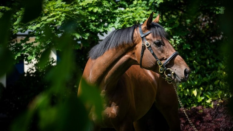 Churchill: returned the best average foal price at the sales in 2019