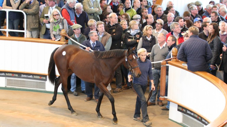 Al Naamah parades in front of a packed gangway at Tattersalls