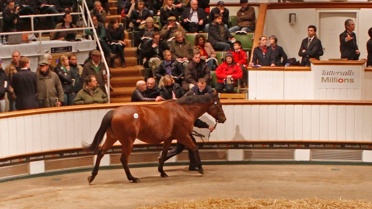 Immortal Verse parades in front of auctioneer John O'Kelly before being sold to BBA Ireland for 4,700,000gns