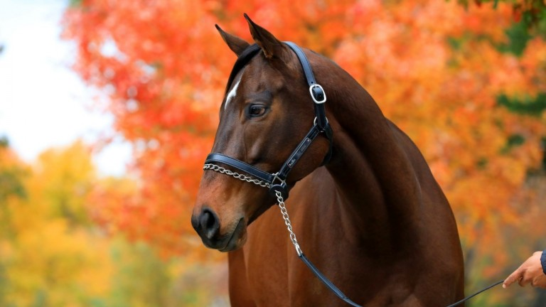Lady Aurelia strikes a pose under the autumn leaves in Kentucky