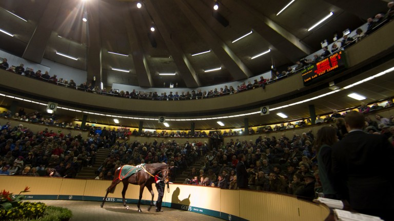 A packed Goffs auditorium looks on as Chicquita sells for €6 million