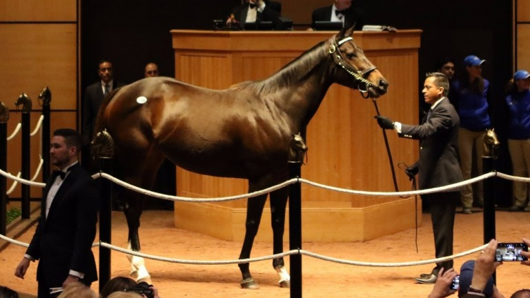 Tepin in the Fasig-Tipton ring before being knocked down to MV Magnier for $8 million
