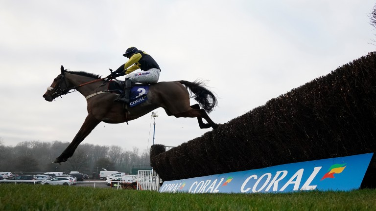 Elegant Escape: stats against him as he bids to repeat last year's win
