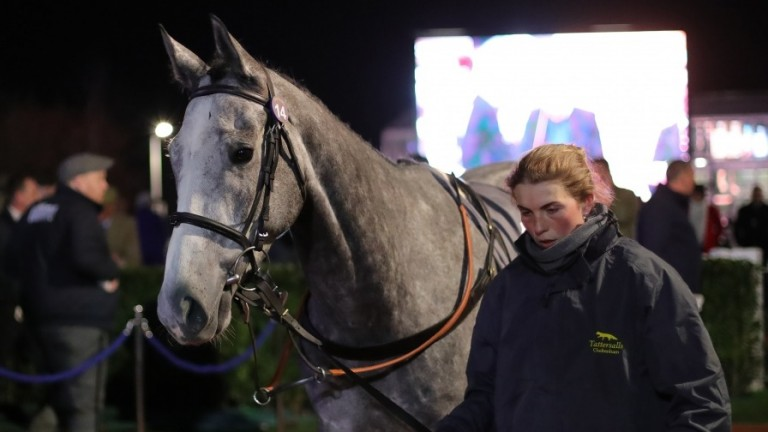 Ramillies was sold for an impressive £220,000 at the Cheltenham Festival