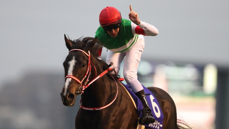Lys Gracieux: landslide success in voting for Japan's Horse of the Year