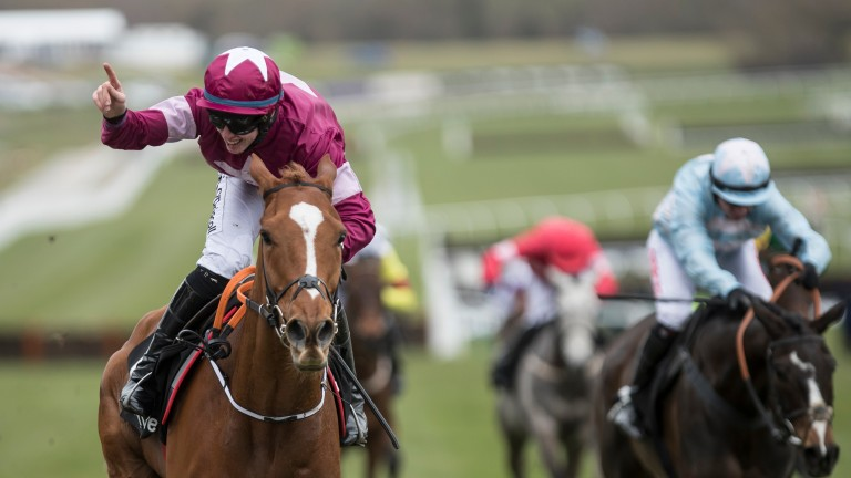 Samcro: entered in the Champion Hurdle