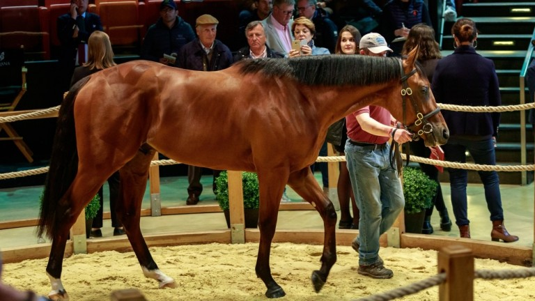 The sale-topping American Pharoah colt in the Arqana ring