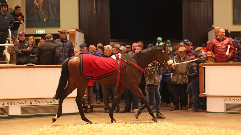 Summer Sands parades in front of the packed gangway at Tattersalls