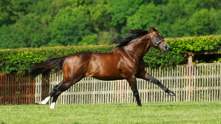 Cable Bay: off the mark as a stakes sire in Australia