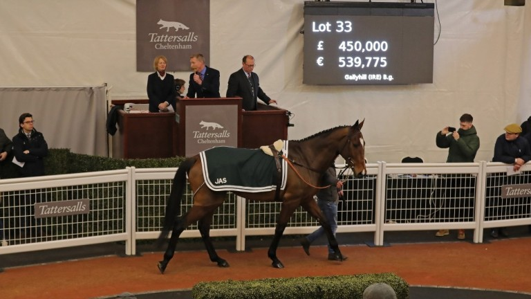 Gallyhill: the year's most expensive point-to-pointer sells for £450,000 at Tattersalls Cheltenham