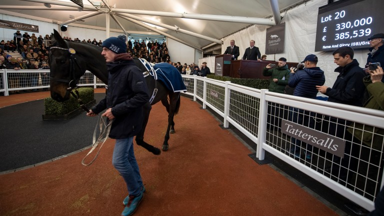 Ballyadam: the £330,000 buy was one of 82 six-figure pointers sold in 2019