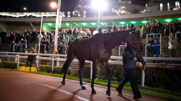 My Whirlwind tops the Tattersalls Cheltenham Festival Sale when knocked down to Nicky Henderson at £400,000