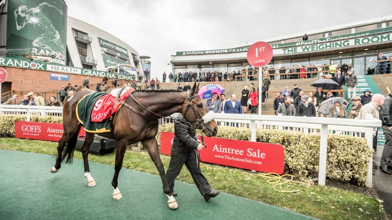 Adrimel: son of Tirwanako checks out hallowed parade ring during the Goffs UK Aintree Sale