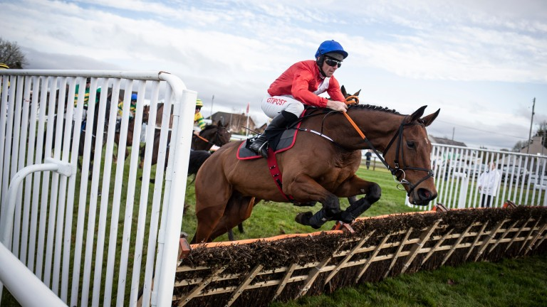 Envoi Allen: will be a warm order to continue his winning run at Naas