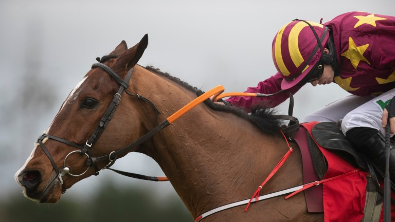 Monalee: features in Saturday's Savills Chase