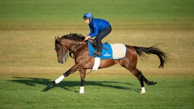 Ghaiyyath (Shane Fetherstonhaugh) on the grass gallops at Moulton Paddock stablesNewmarket 18.9.19 Pic: Edward Whitaker
