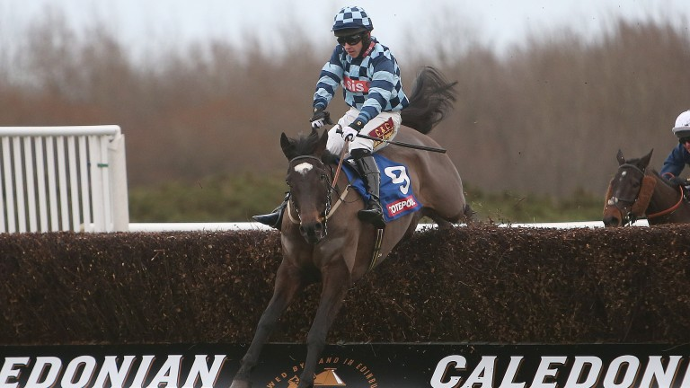 Indian Temple: won at Musselburgh on New Year's Day in 2016