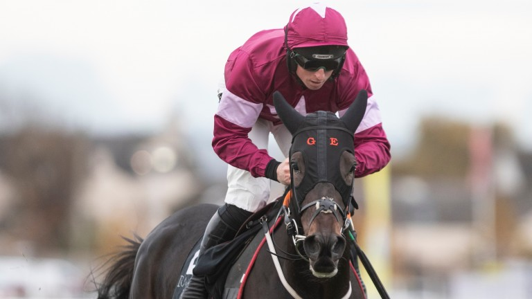 Easywork: won four of his seven career starts and never finished outside the first three