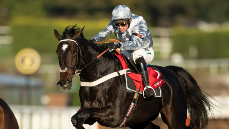 Santini: Gold Cup contender is set to line-up in Saturday's Cotswold Chase