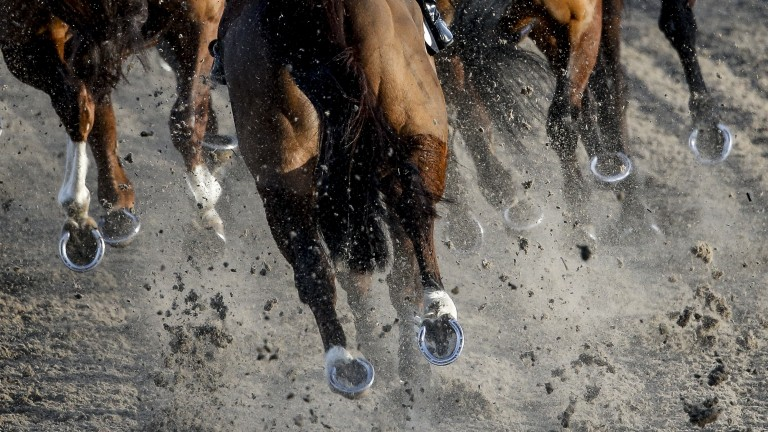 Horses race on the Polytrack surface at Chelmsford