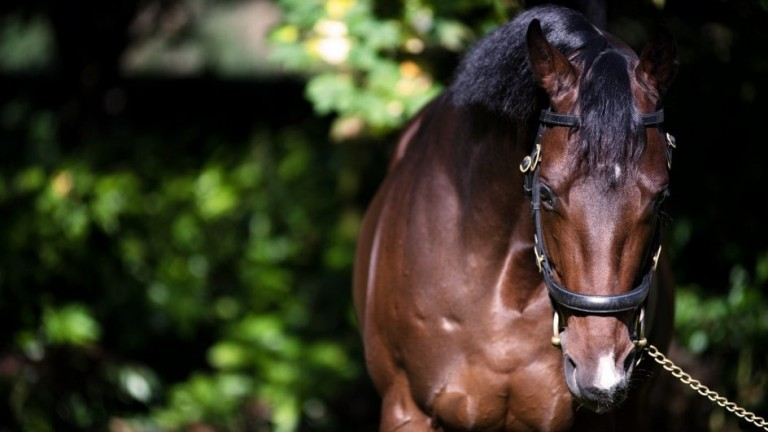 Calyx: high-class son of Kingman has his first foals arrive this year