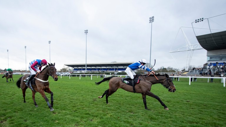Frodon: has two options at the Cheltenham Festival
