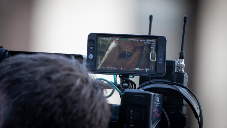 Cameras at the ready as equine superstars go on show on the Irish Stallion Trail
