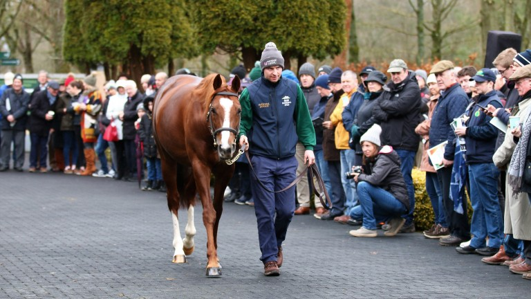 Decorated Knight: Irish National Stud resident gained his first success with Silver Bullet Lady