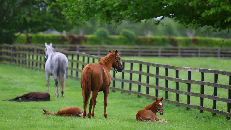 Mares and foals sleep during The Queen's visit to the Irish National Stud in 2011