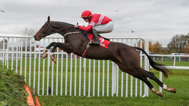 Real Steel, who holds Ryanair Chase and Magners Cheltenham Gold Cup entries, impressed when winning at Down Royal two starts ago