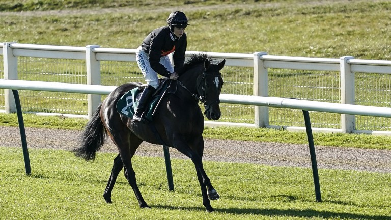 Desirable Court: a chance to buy the Listed-winning chaser at Goffs UK