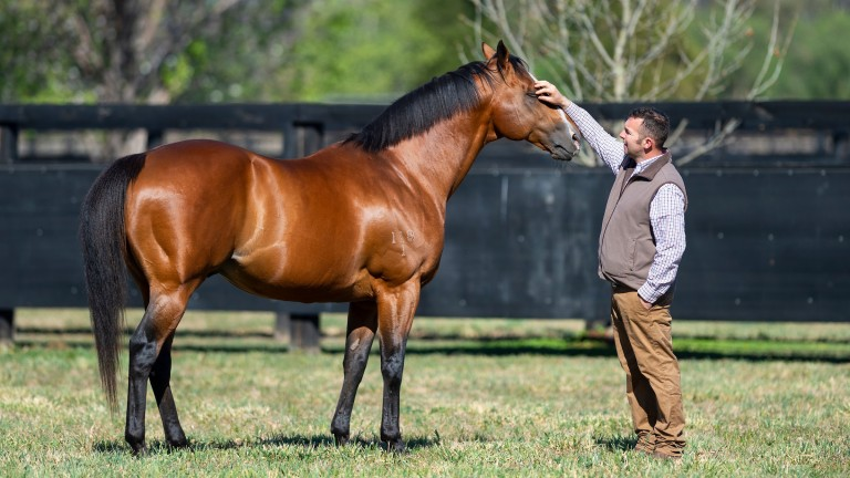 Not A Single Doubt in his paddock at Arrowfield