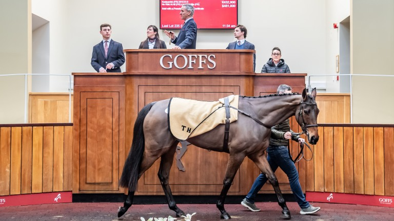 Keskonrisk: son of No Risk At All is knocked down to Henrietta Knight for £370,000