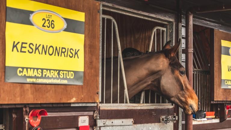 Keskonrisk keeps an eye on proceedings from his stable