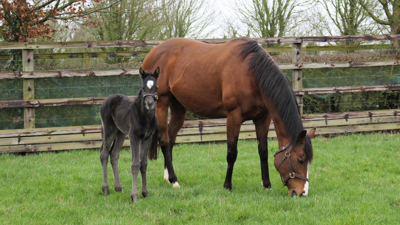 A star is born: champion Minding delivers a filly by the late, great Deep Impact