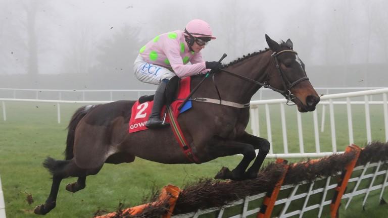 Benie Des Dieux: has a choice of three races at the Cheltenham Festival