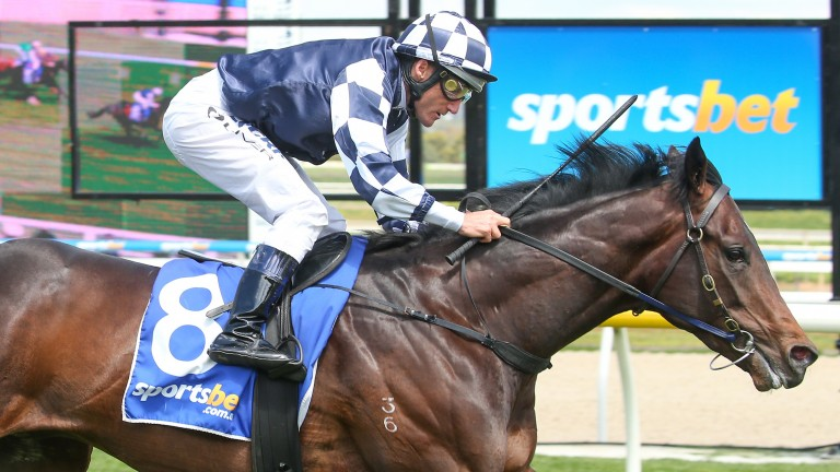 Russian Camelot: became the first northern hemisphere-bred colt to win a derby in Australia