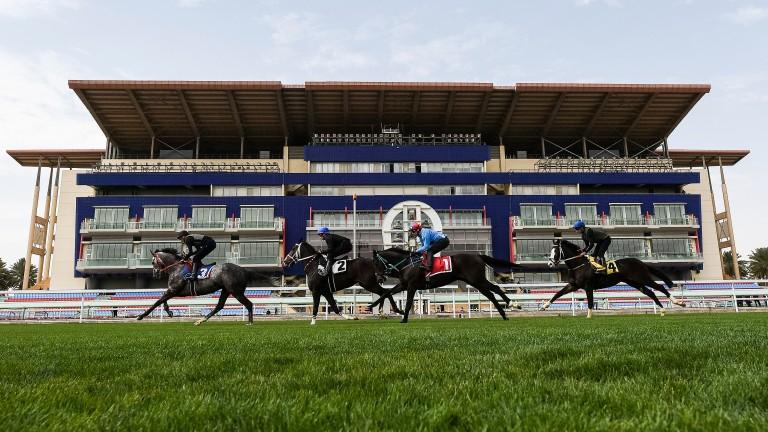 The new jockeys' challenge will take place at King Abdulaziz racecourse