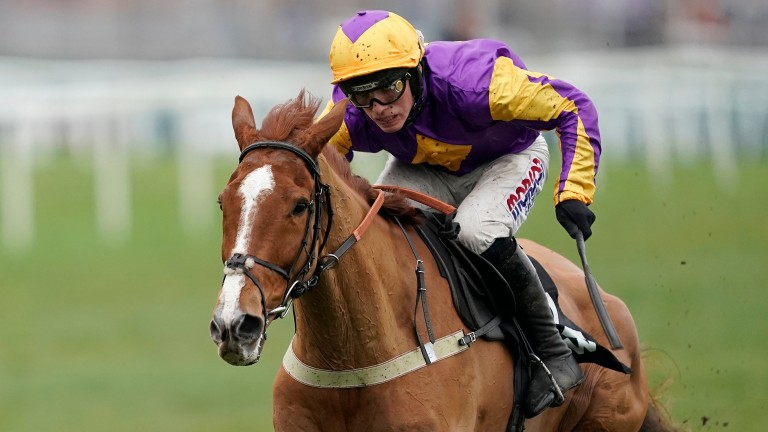 Copperhead: 8-1 chance for the Ladbrokes Trophy on Saturday
