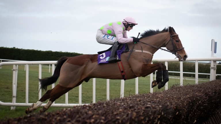 Faugheen is bidding to win the Grade 1 Marsh Novices' Chase at the age of 12