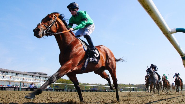 Kachy: late withdrawal on Saturday after banging his hock in the racecourse stables
