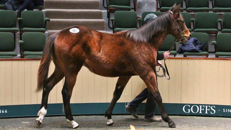 Tuesday's session-topping son of Churchill in the Goffs sale ring