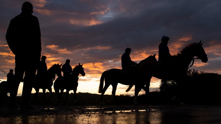 The BHA has released eight videos addressing concerns over equine welfare