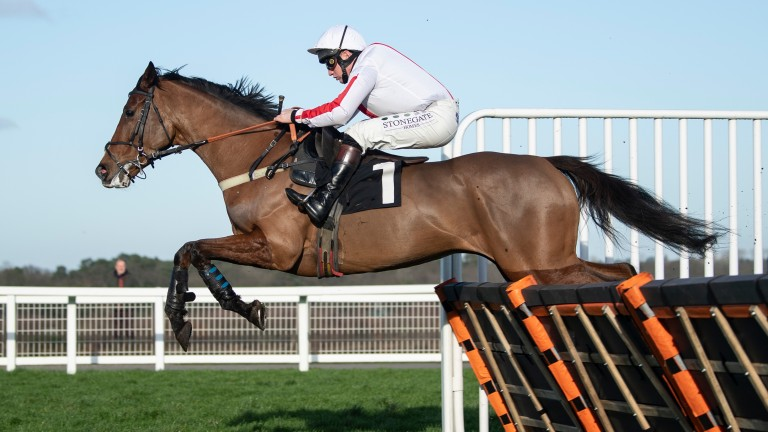 Goshen: unbeaten Gary Moore-trained juvenile is well fancied for the JCB Triumph Hurdle