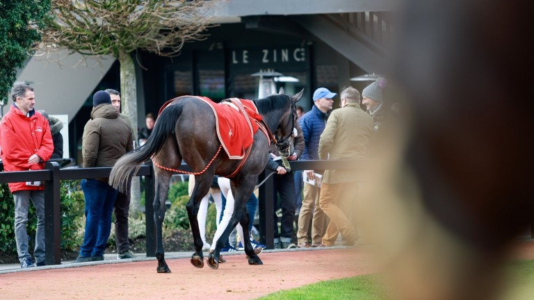 Last year's February Sale was the strongest on record with more than €5 million in total sales